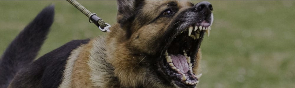 Angry dog about to bite